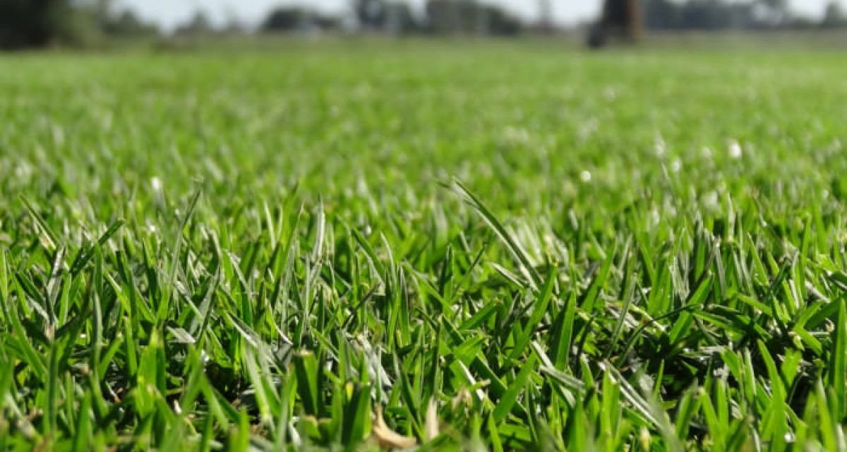 Noble Green Premium Turf