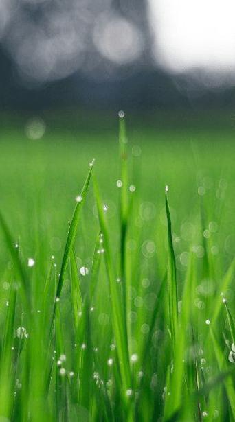 Sydney Lawn and Turf